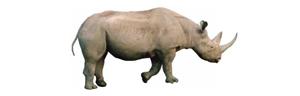 Mozilla Rhino logo